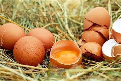 egg-1510449_640_R
